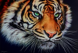 Staring Tiger by Darryn Eggleton - Original Painting on Box Canvas sized 35x24 inches. Available from Whitewall Galleries