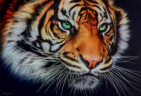 Staring Tiger by Darryn Eggleton - Original Painting on Box Canvas